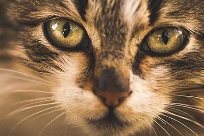 фотография на животни