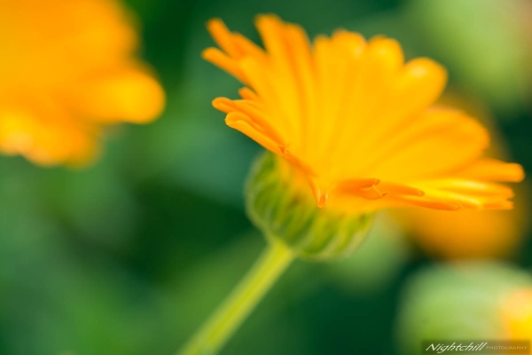 Арт Фотография на Цветя